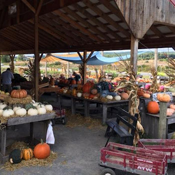 Great prices on pumpkins