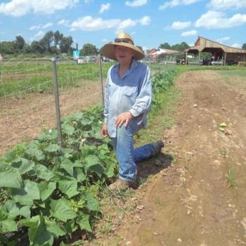 Rick explains how the cucumber plants are growing