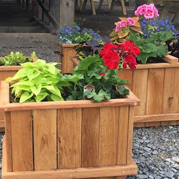 Flowers in planters