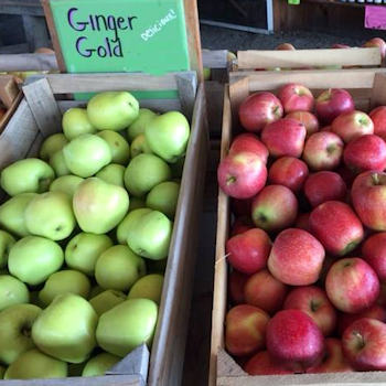 Ginger Gold and Gala Apples