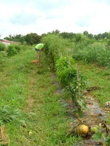 Garden Plot in July