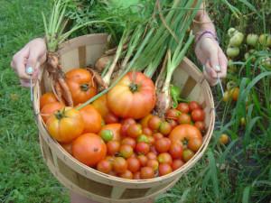 Garden Plot harvest