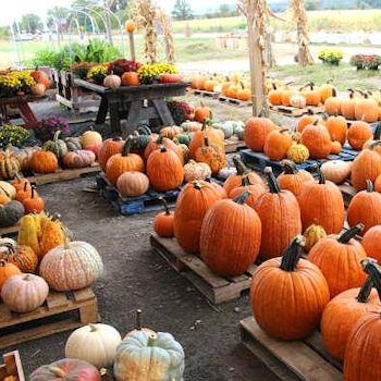 Pick a Pumpkin!