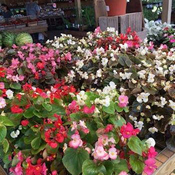 Spring flowers at Brossman's