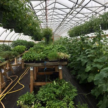Brossman's Greenhouse