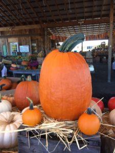 Pumpkins at Brossmans!